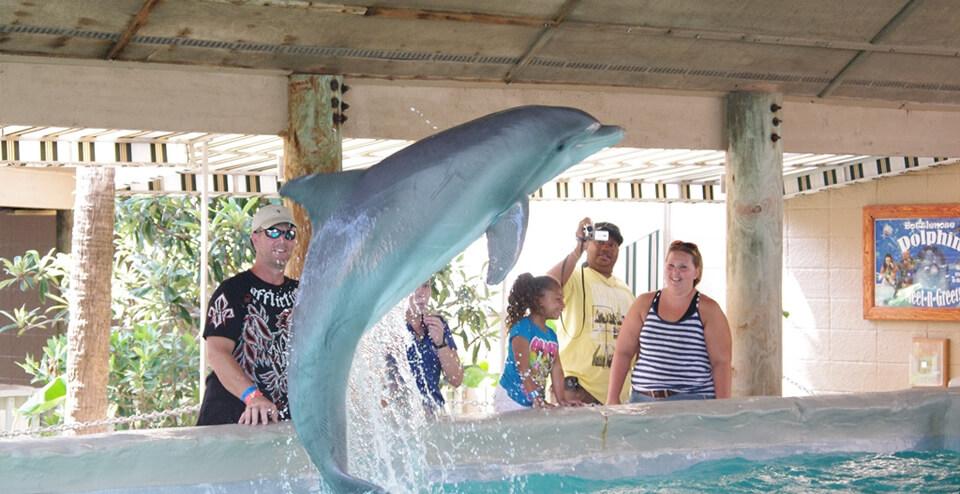dolphin-meet