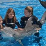 swimwithdolphins
