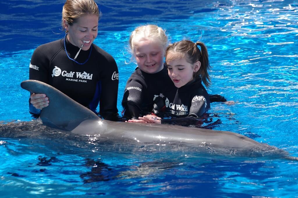 Florida Tow Show >> swim with a dolphin in panama city beachGulf World Marine Park