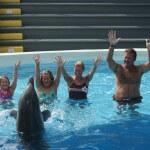 swim with dolphins panama city beach