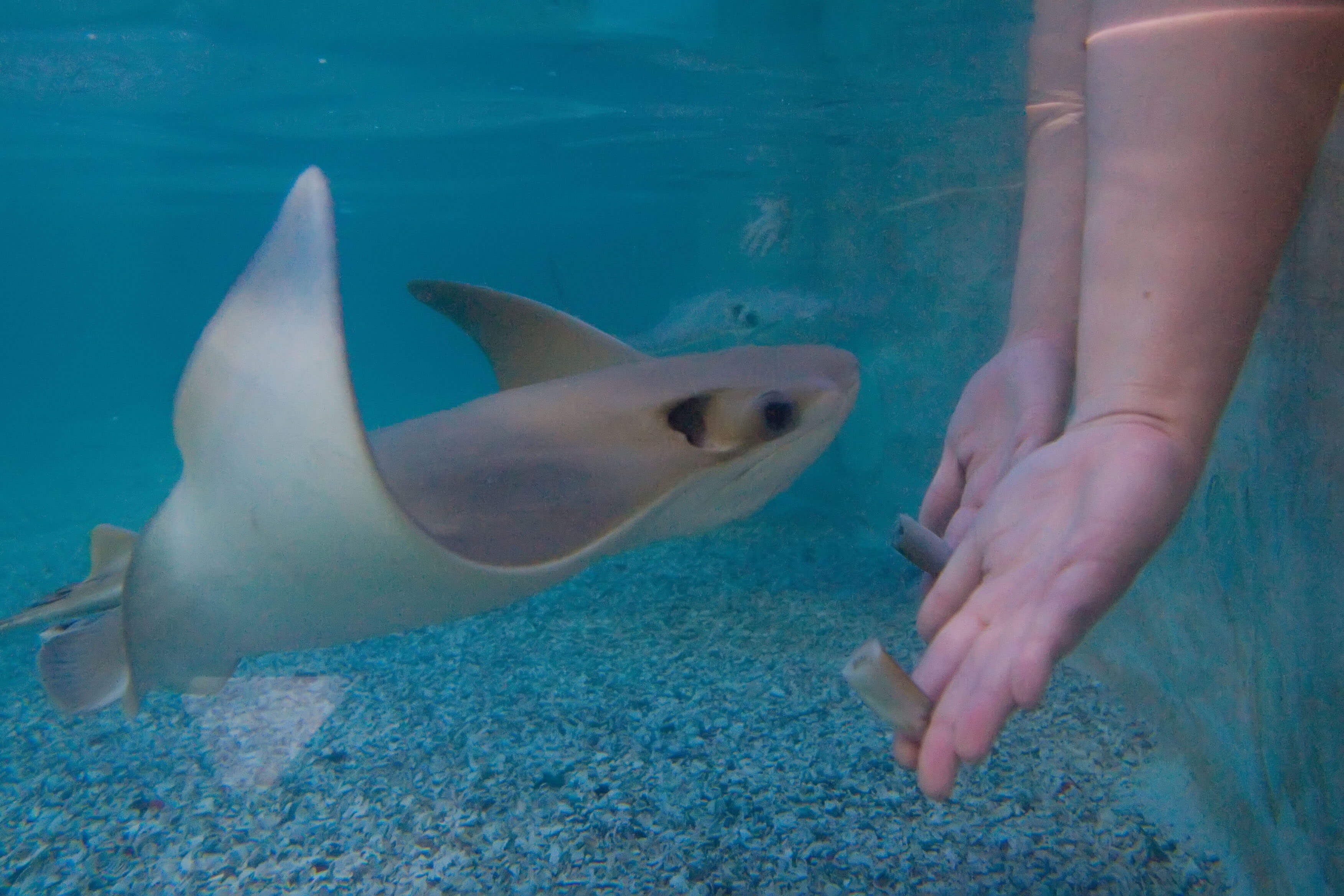 feed the stingrays at panama city beach