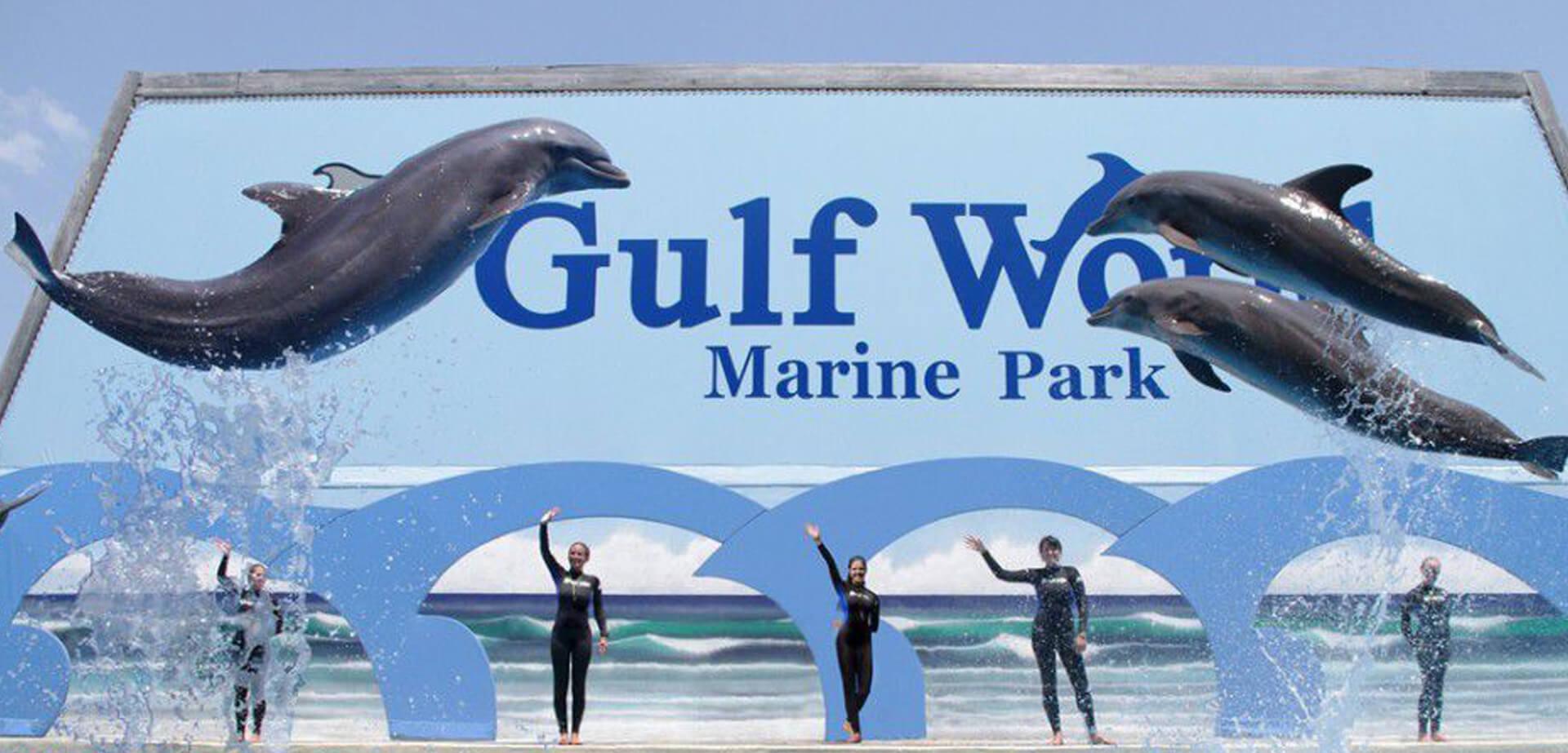 Bottlenose-Dolphin-Show-Gulf-World.jpg