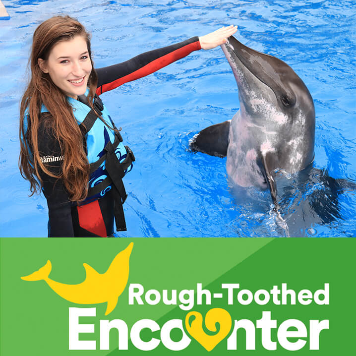 Rough-Toothed Dolphin Encounter