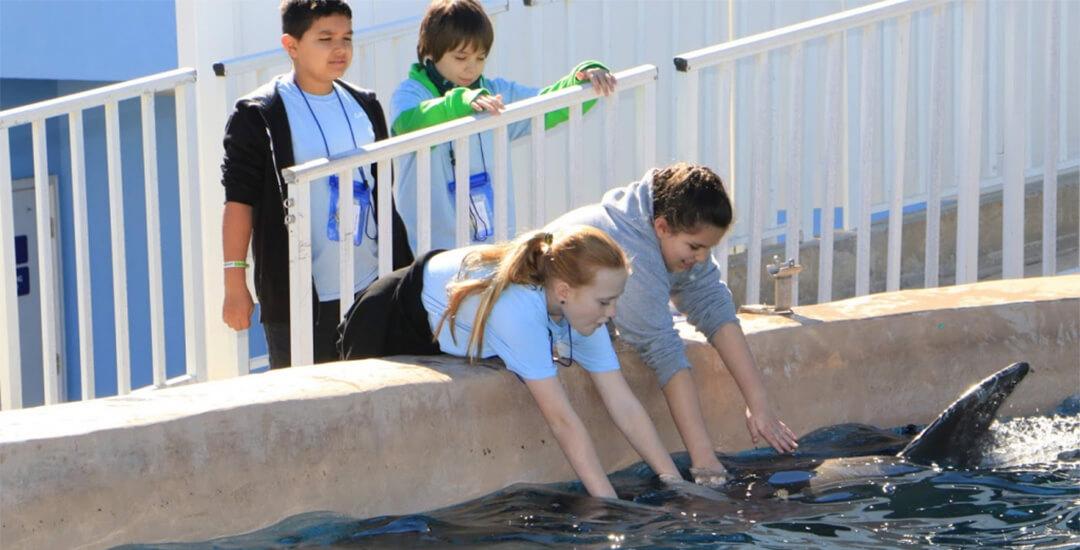 Children petting bottlenose dolphins at SEA Camp in Gulf World Marine Park
