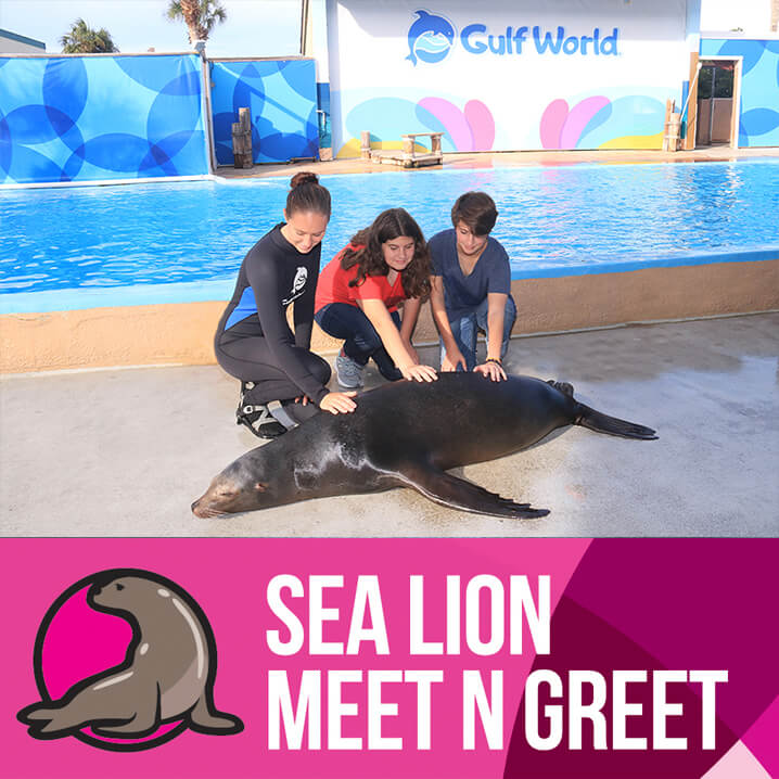 Sea Lion Meet N Greet
