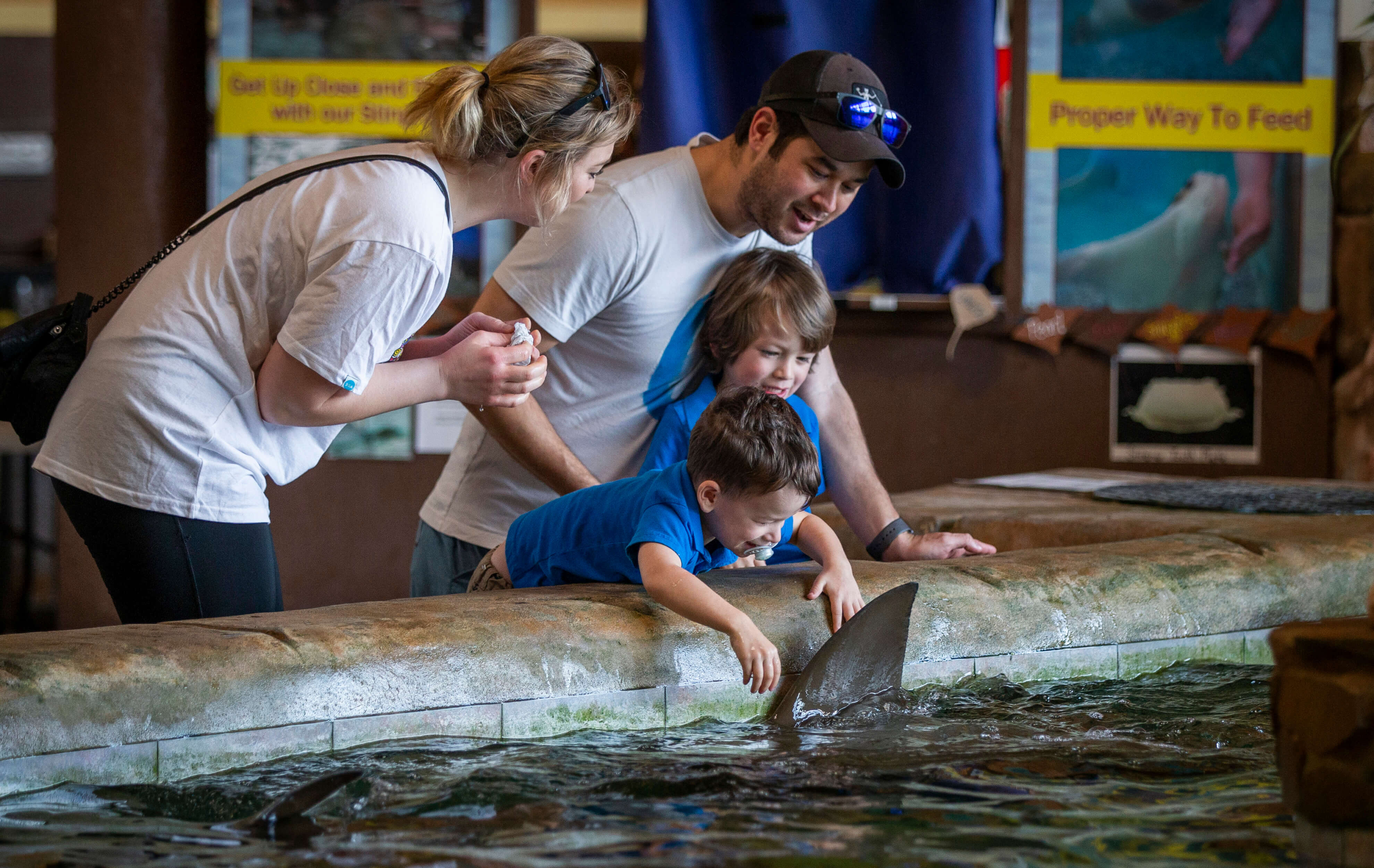 Family with child interacting with stingray