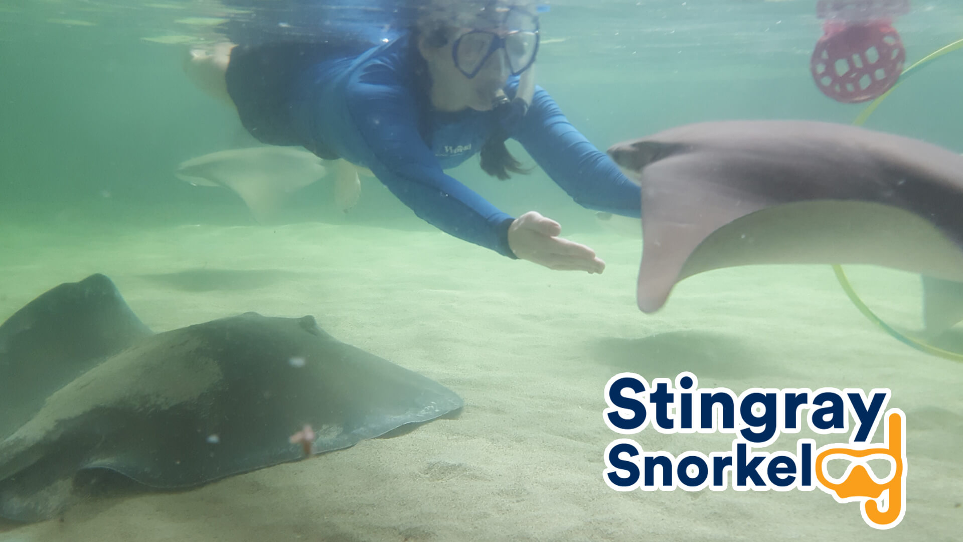 Gulf World Marine Park Stingray Snorkel Interactive Encounter